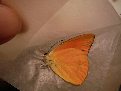 28 Mixed Butterflies Collection - Unmounted Lot #1