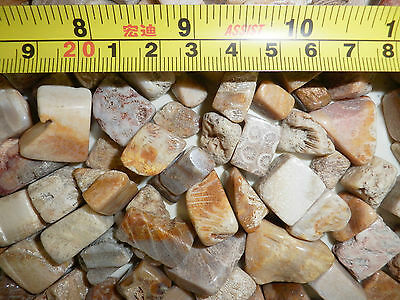 Tumbled Fossil Stone Honeycomb Coral small pieces 180 gram Lot