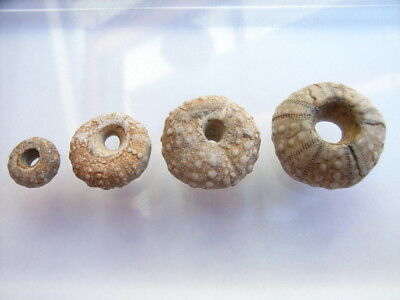 4 Ancient Neolithic Shell, Slug Beads, Stone Age, VERY RARE !!