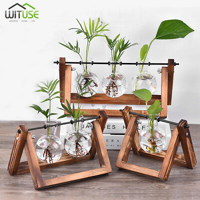 Diy Glass Vase Hanging With Wooden Base For Hydroponic Planter Home Desk Decor