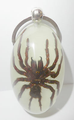 Insect Large Key Ring Tarantula Spider H. huwenum Specimen Glow in the dark
