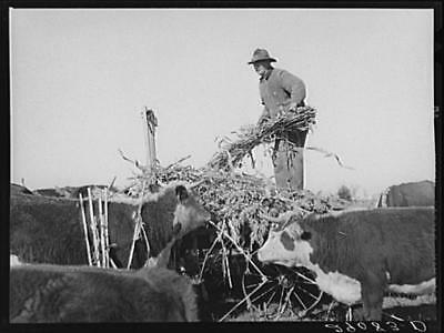 Osage Farms,Missouri,MO,Arthur Rothstein,FSA,Farm Security Administration,9