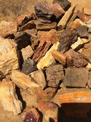 Natural Petrified Wood Fossil Small Pieces Aquarium Crafts New Mexico Lbs
