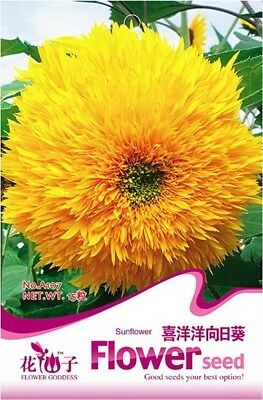 Original Package 15 Sunflower Seeds Helianthus Annus Flower Seeds A107