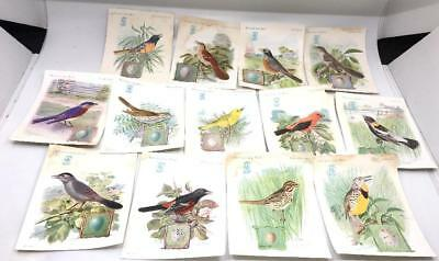 (13)  1927 vintage Singer Sewing Victorian SONG BIRD Trade CARDS  antique paper
