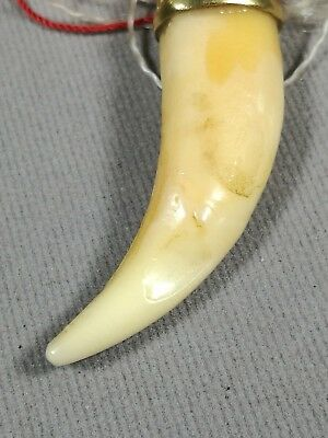 AMULET Tiger Tooth Fang Carve Thai Talisman Pendant, mid 20th C.