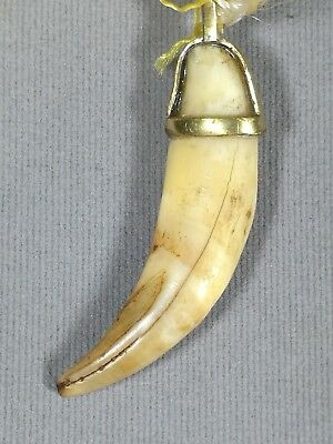 TALISMAN Thai AMULET Tiger Tooth Fang Carve Pendant, mid 20th C.