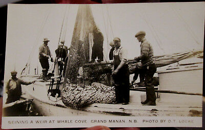 1930s Seining a Weir at Whale Cove Grand Manan New Brunswick real photo postcard