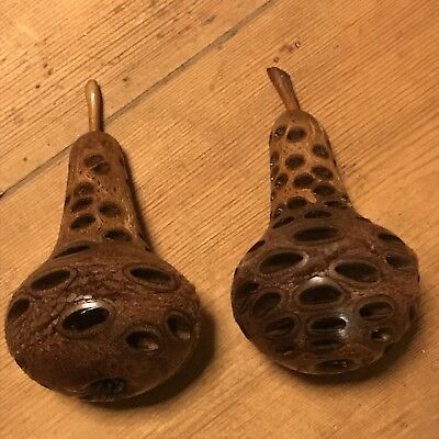 Banksia Nut Carving Pair Of Pears wooden