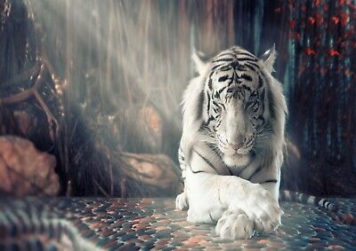 White Tiger Nature Animal Photo Poster Print ONLY Wall Art A4