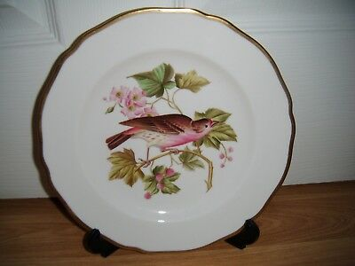 Spode Y6466 Hand Painted Bird Cabinet Plate ~ House Finch ~ 1st ~ Excellent