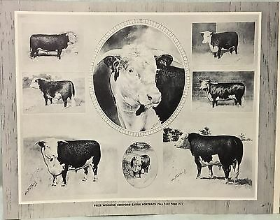 Vintage Hereford Cattle Cow Horse Book George Ford Morris 1952 Print