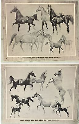 **2** Vintage Arabian 1952 Prints Horse Book George Ford Morris Not Reproduction