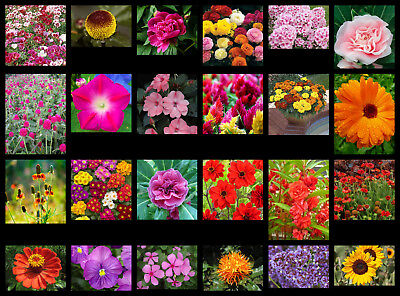 Flower Seeds - 24 Interesting Varieties From Our Collection - Selection #1.