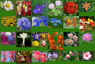 Flower Seeds - 24 Interesting Varieties From Our Collection - Selection #3.