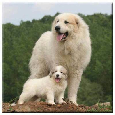 "Great Pyrenees 4"" Decorative, Cork Backed, Ceramic Tile"