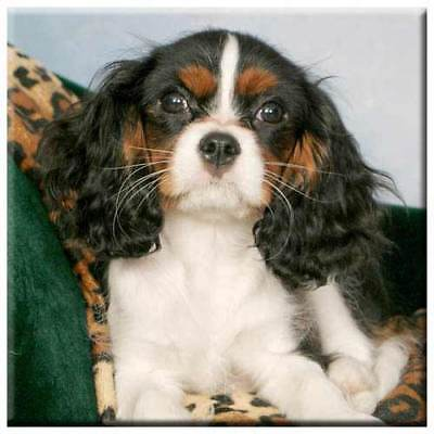 "Cavalier King Charles Spaniel 4"" Decorative, Cork Backed, Ceramic Tile"