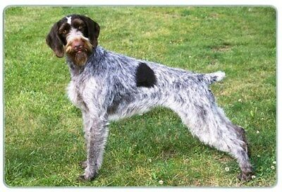 German Wirehair Pointer Cutting Board, Small