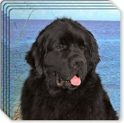Newfoundland Rubber Coaster Set