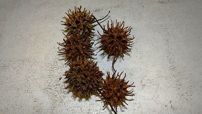 Witches' Burrs pagan metaphysical  protection blessings lot of 30 per order