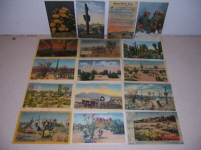 1950s-70s CACTUS DESERT ANTIQUE & LINEN POSTCARD LOT of 16 DIFF