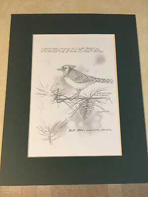 Original Print Hand Drawn Blue Jay In Pencil Signed '95 Clayton State Ga
