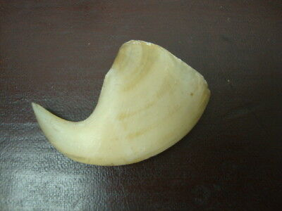 Antique Jewellery Large Tiger Claw Shaped Pendant