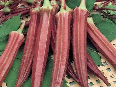 RED BURGUNDY OKRA - 30 Seeds