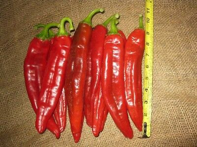 Chilli Seeds Big Jim 40 Seeds