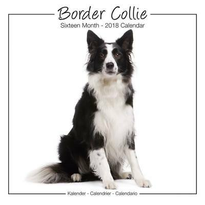 Calendrier Border Collie Studio 2018