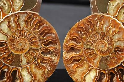 "6712x Fossil PAIR Ammonite Great Color Crystal Cavities LARGE 4.7"" 110myo 118mm"