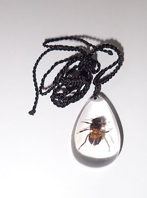Insect Small Necklace Honey Bee Apis mellifera Specimen SD07 Clear