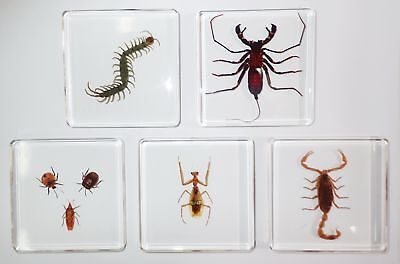 7 Insect Specimen Box Set in 5 Clear Square Slide Block Education Kit SS82B