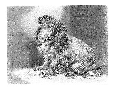 """The Pet of the Duchess"" - Engraving after Sir Edwin Landseer - c1850 - 10""x12"""