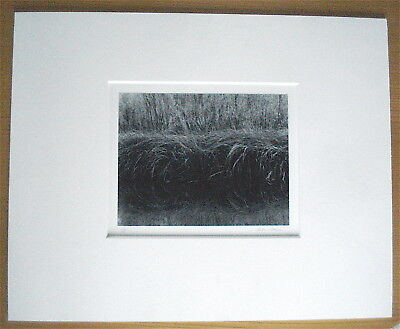 Rare Photo Jeffrey Conley Gelatin Silver Print Grasses C2000 Signed