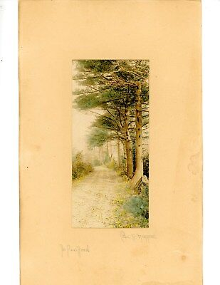 """The Pine Road"" Vintage Hand Colored Photograph Charles R. Higgins"