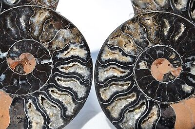 "RARE 1 in 100 BLACK Ammonite Pair Deep Crystals FOSSIL XLARGE 133mm 5.3"" n2615"