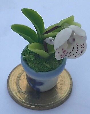 1:12 Scale Handmade Red Orchid In A Pot Tumdee Dolls House Flower Accessory O1