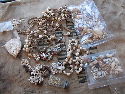 Collection Sea Shells for Shell Work Box, Crafts, Marine Aquarium etc Cowries