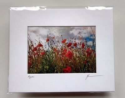 Red Poppies, Color Photograph, matted 8 x10