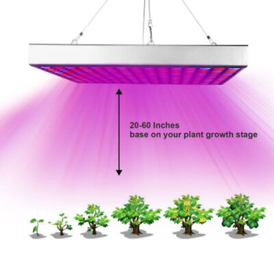 2000W Double Chip LED Grow Light Full Spectrum Red/Blue/UV/IR For Indoor Plants
