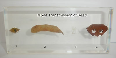 Mode Transmission of 4 types Plant Seed Set in clear Block Education Specimen
