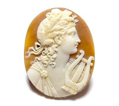Beautiful Large Antique Victorian Carved Shell Cameo For Re-Setting (D32)