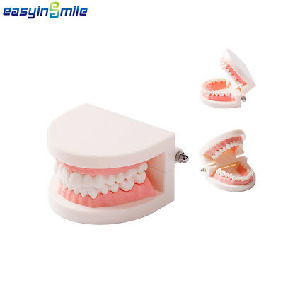 Easyinsmile 1Pc Dental Teeth Teaching Study Dentist Typodont Demonstration Model