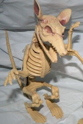 Skeleton Rat Halloween Decor Prop Party Decoration movable head, arms and jaw