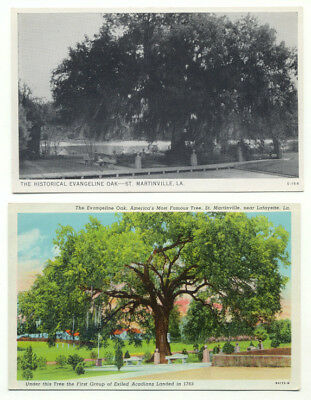St. Martinville LA The Historical Evangeline Oak Lot of 2 Postcards - louisiana