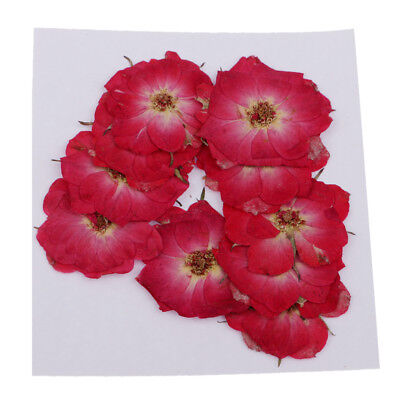 10x Pressed/Dried Leaves Flower Rose for Scrapbooking Card Making Craft DIY