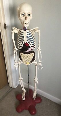 Billie Bones How Your Body Works Skeleton And Muscles With Magazines