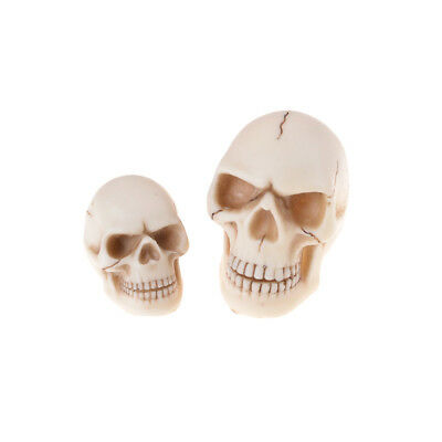 Resin Human Skull toy Decoration Prop Skeleton Head Halloween Decor  eR