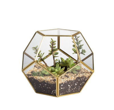 NCYP Brass Glass Pentagon Regular Dodecahedron Geometric Terrarium Container